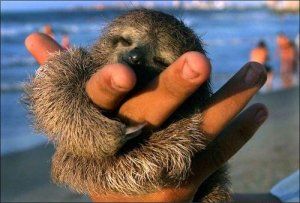 The Sloth - Our Super Hero via Miranda from flickr creative commons